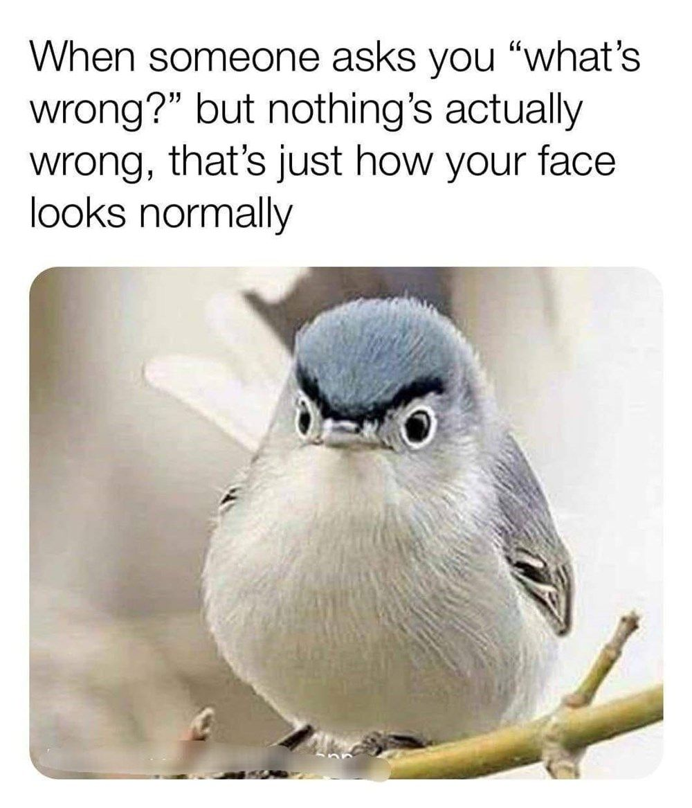 Morning Wake Up Call Fresh Animal Memes October 25th 2020 Best Funny Jokes Funny Pictures Can T Stop Laughing Funny Relatable Memes