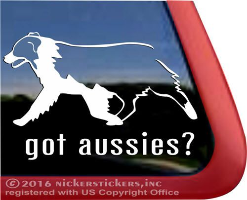 got aussies?   Australian Shepherd Vinyl Decal #nickerstickers#haulinauss #vinyldecal #australianshepherds#australianshepherddecal