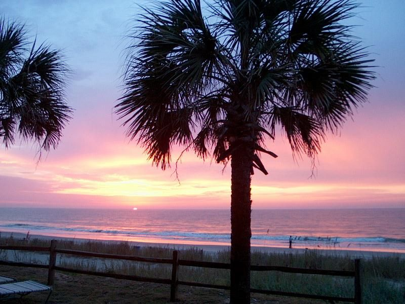 Myrtle Beach South Carolina Images Palm Trees Travel Photos