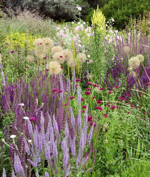 Planting a new perspective noel kingsbury piet oudolf for Piet oudolf favorite plants