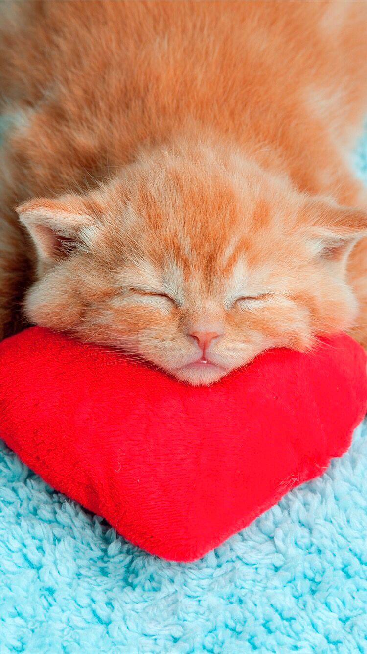 Cute Kitty Wallpaper Kucing Lucu Kucing Lucu