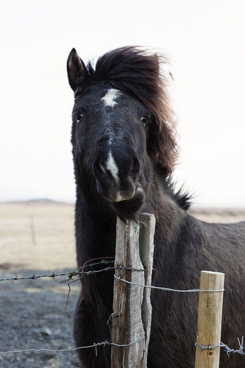 beautiful #horse