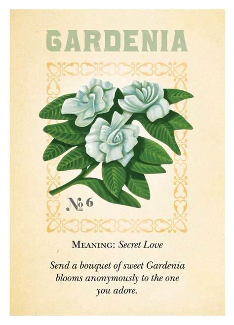 Gardenia color inspiring pinterest gardenias flowers and gardenia color inspiring pinterest gardenias flowers and flower meanings mightylinksfo