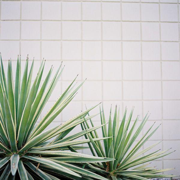 Palm Springs on Hasselblad « Jose Villa | Fine Art Weddings