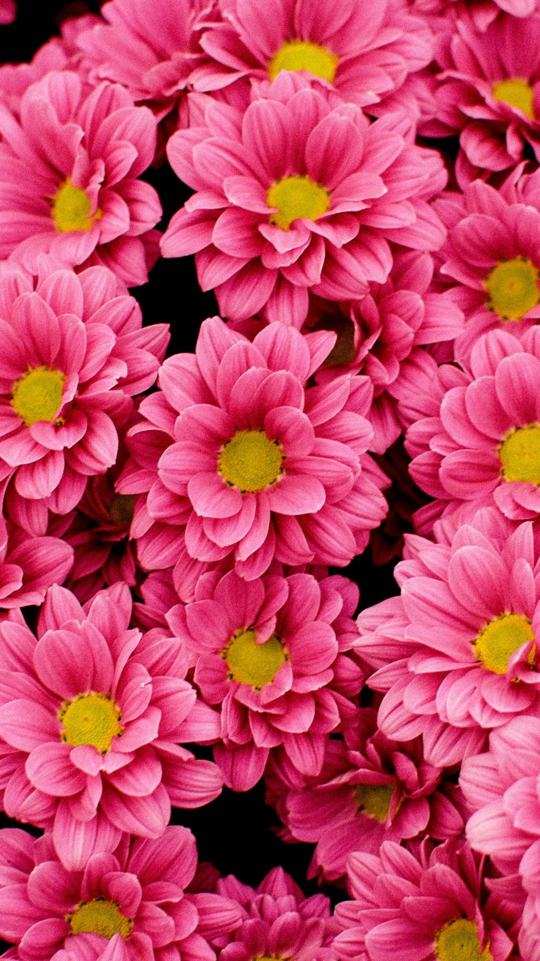Bright Pink Flowers Wallpaper Pink Flowers Wallpaper Flower Wallpaper Cute Flower Wallpapers