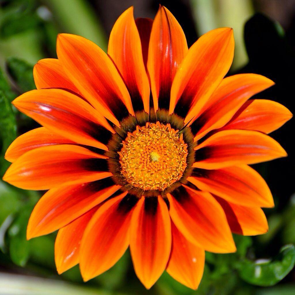 Orangealicious!