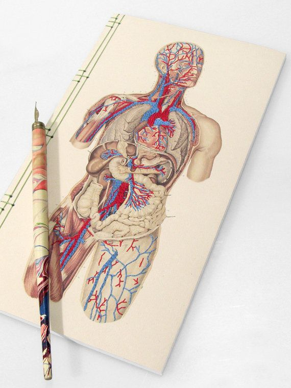 Anatomy Journal Circulatory System Of The Human Body Anatomical