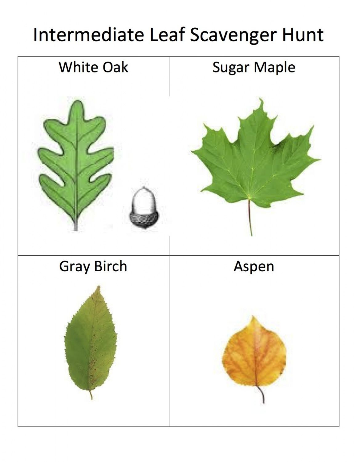 Names Of Leaves With Pictures