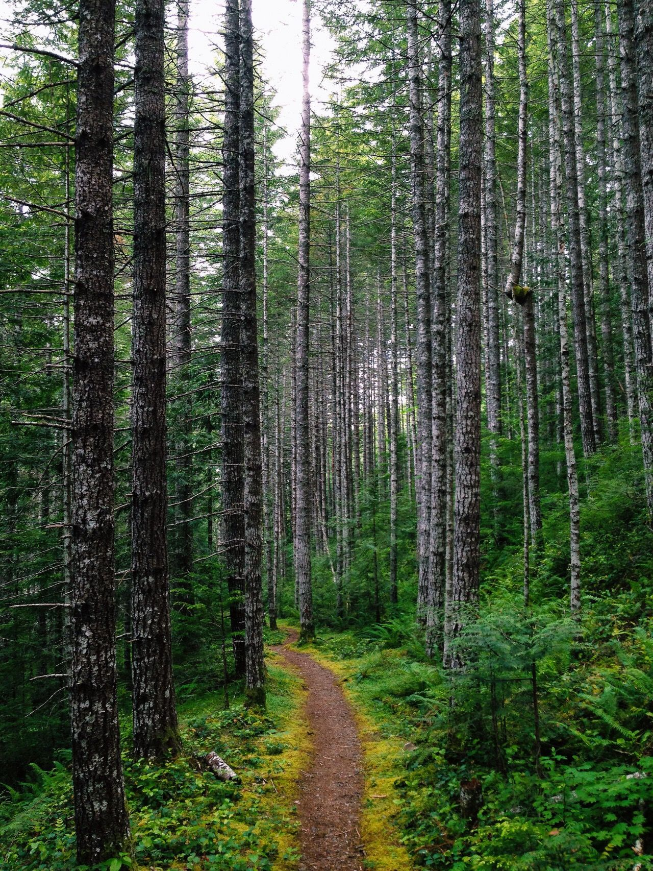 Forest trail location unknown by eric kimberlin cr