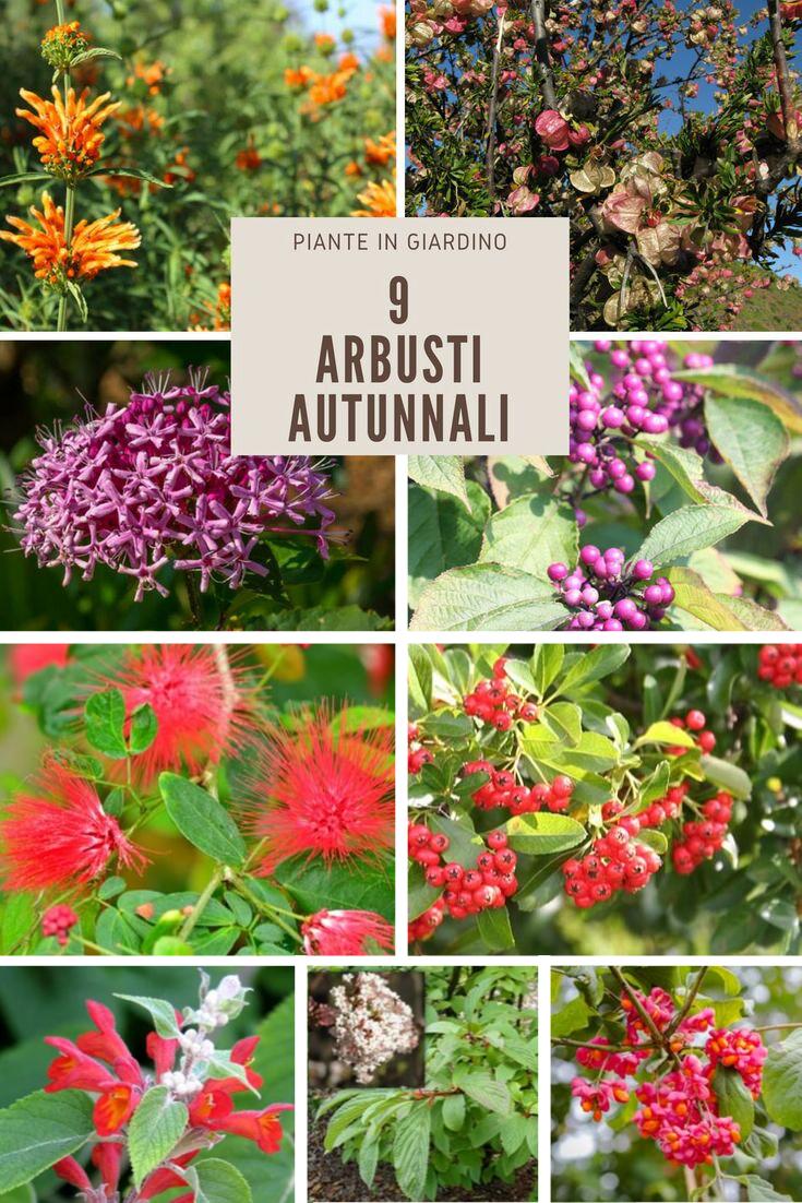 Cespugli Sempreverdi Con Fiori 9 colorati arbusti autunnali per un giardino vivace fino all