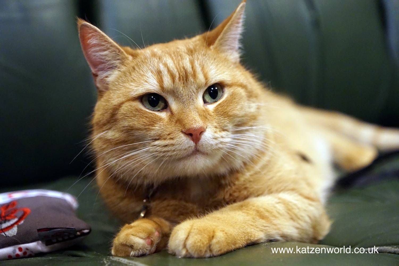 Calling All Streetcat Bob Lovers Katzen Bob Der Streuner Kater