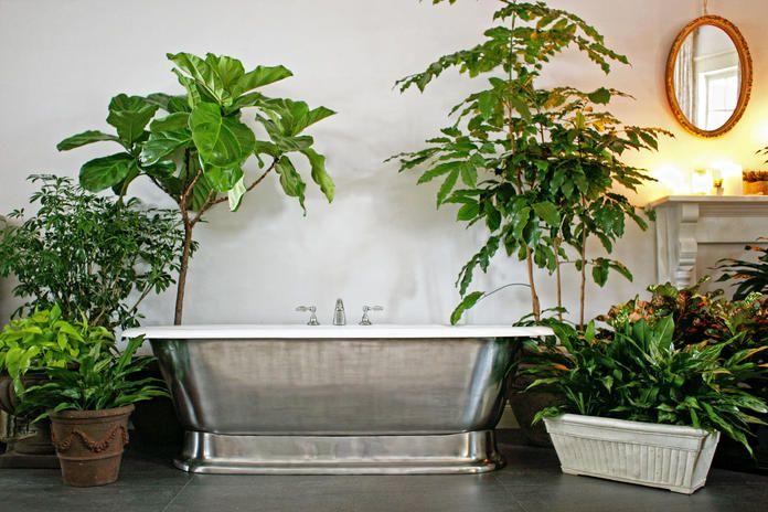 Die Besten Pflanzen Furs Badezimmer Pflanzen Furs Bad Pflanzen Im Badezimmer Badezimmer