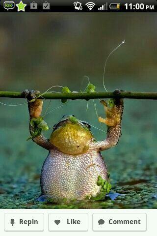 Frog!!