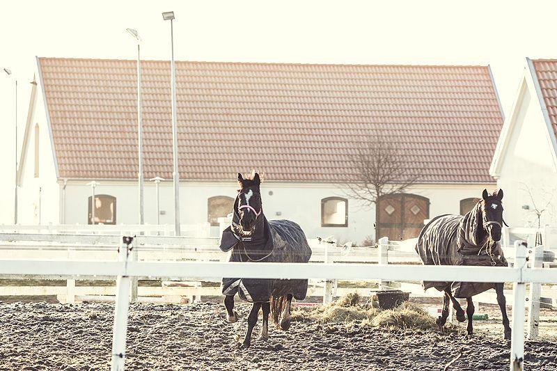 Bukowskis Real Estate: Fulländad hästgård på fridfullt läge