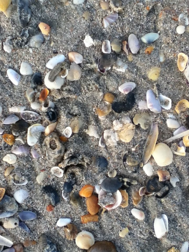 Seashells Myrtle Beach 2017