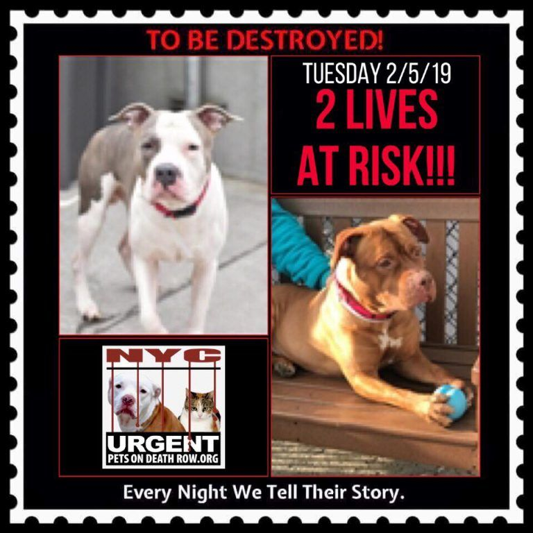 Dogs To Be Destroyed