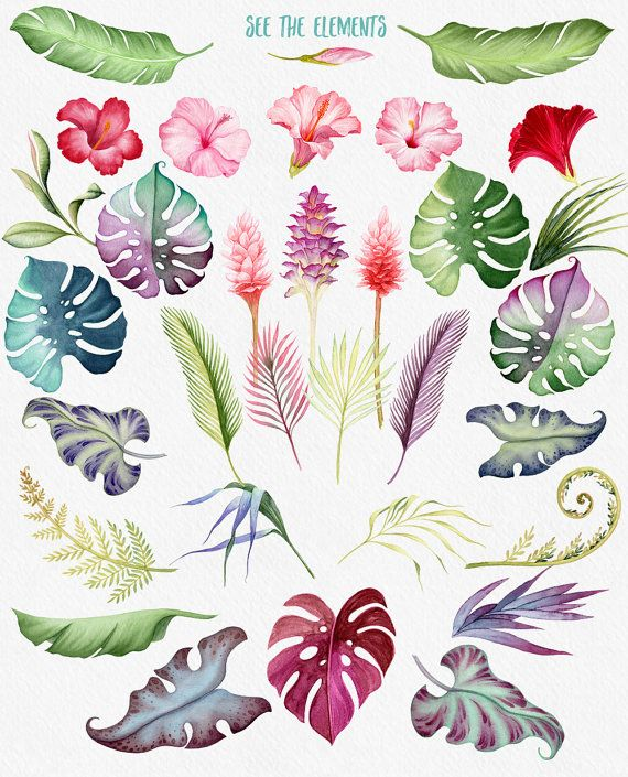 Tropical flowers watercolor clipart