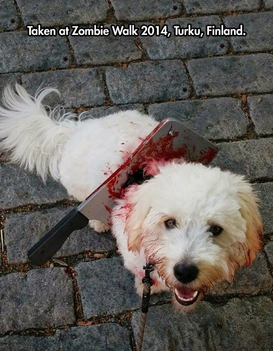 Fun Animals Wiki Videos Pictures Stories Scary Dog Costumes