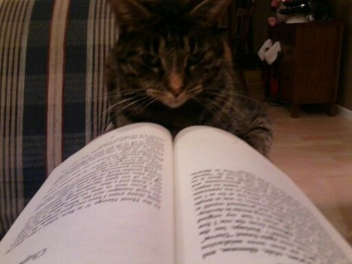 Snickers enjoys a good book