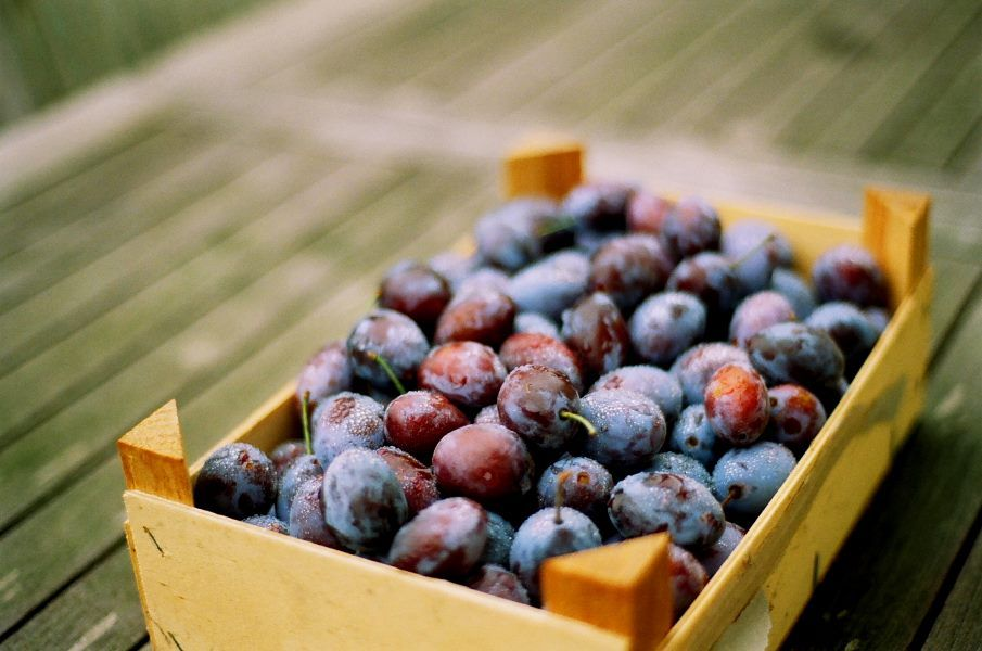 Health Tip:  Plum, a sweet stone fruit has numerous health benefits. It protects heart, lowers blood sugar, boosts bone health and improves memory. The dried form of plums - prunes help regulate bowels.