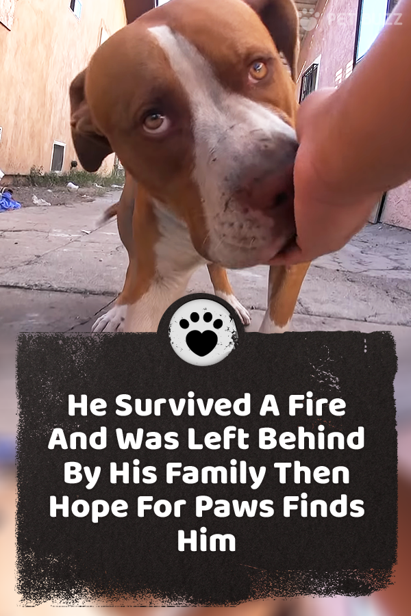 Hope For Paws received a call about a dog that had been