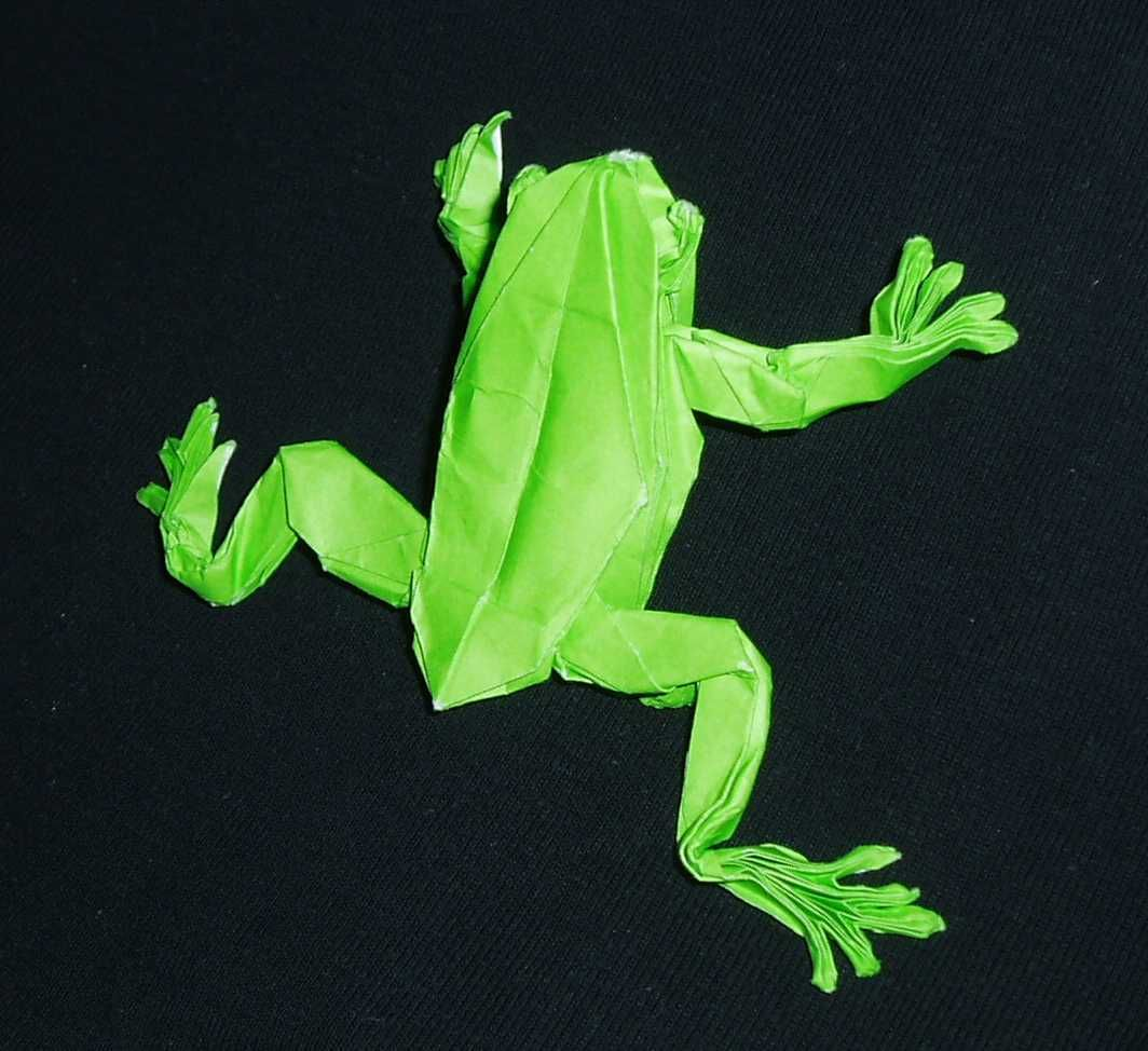Origami tree frog origami pinterest origami frogs and tree origami tree frog jeuxipadfo Image collections