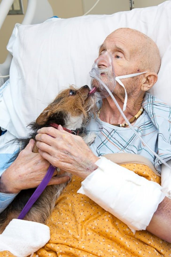 12+ Above and beyond animal care images