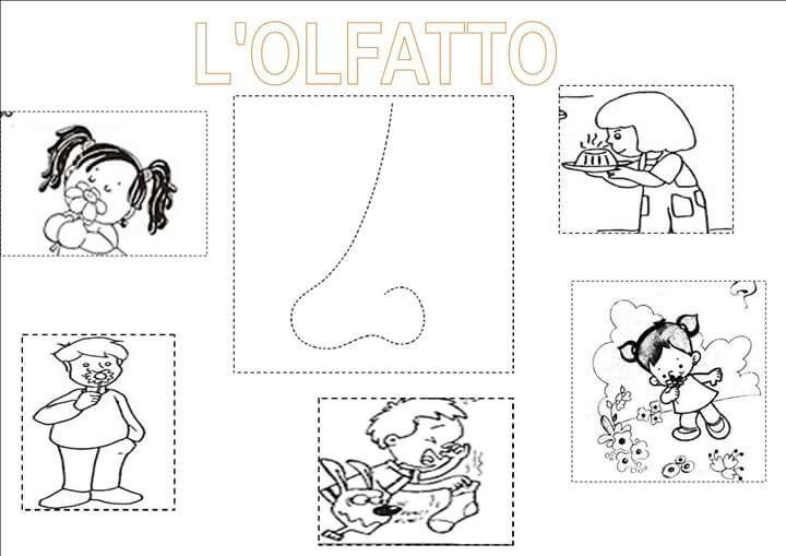 Olfatto   schede didattiche   Pinterest
