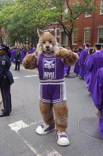 Why didn't I get into NYU?