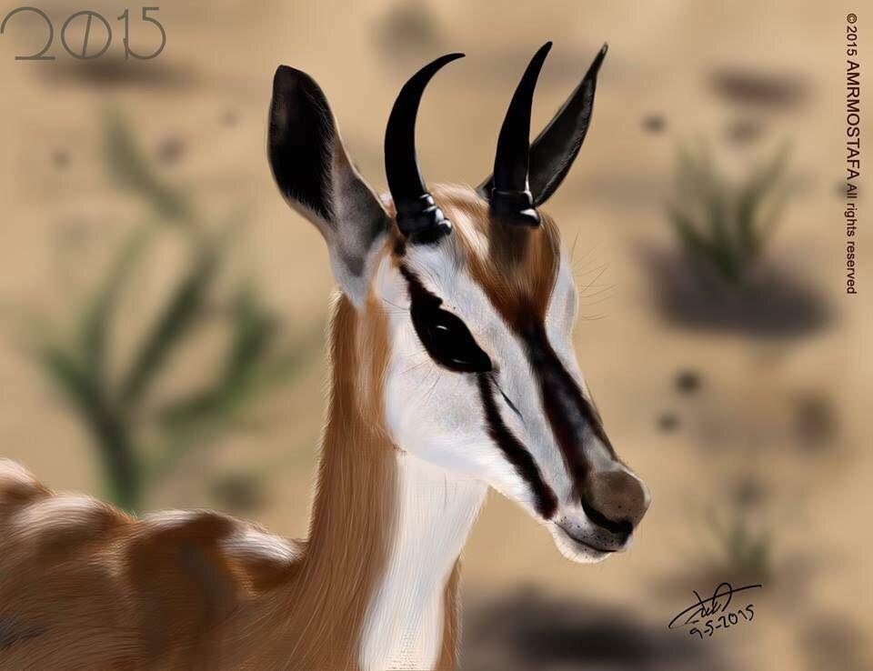 غزال المها الجميل عمرو مصطفى Drawings Animals Kangaroo