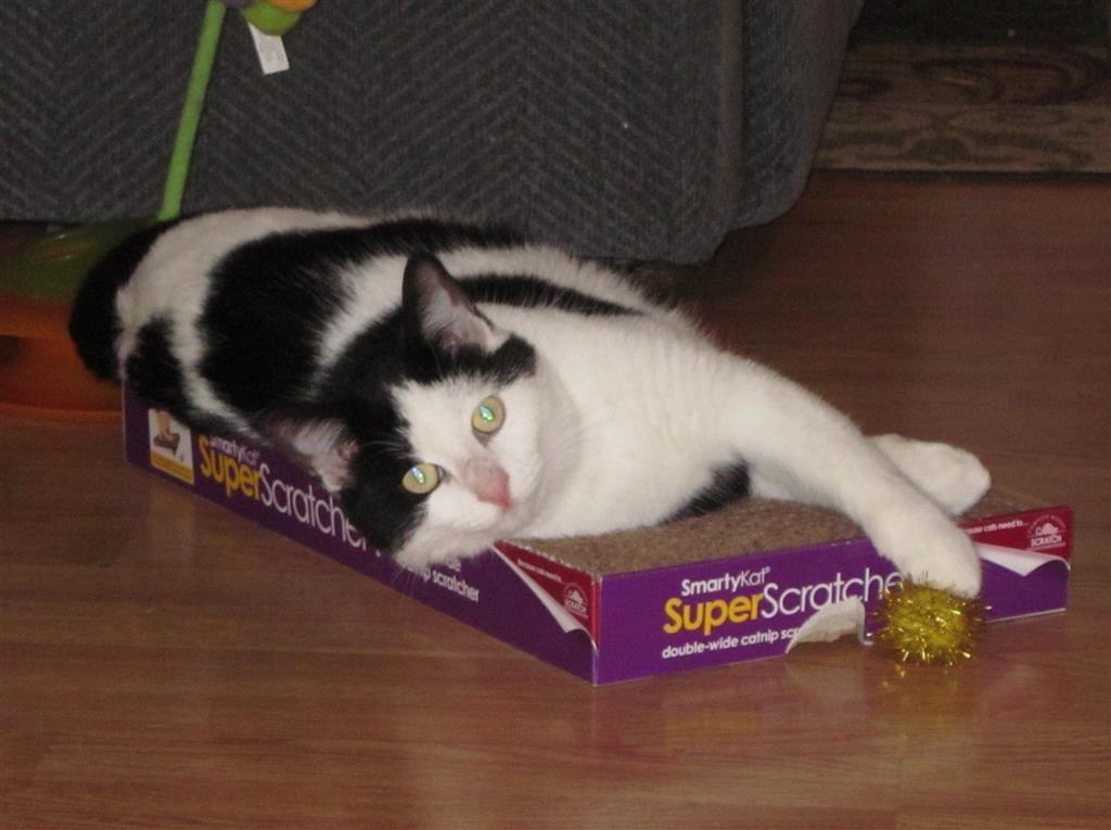 Lost Cat Female Siren, WI, USA 54872 Lost cat, Cats