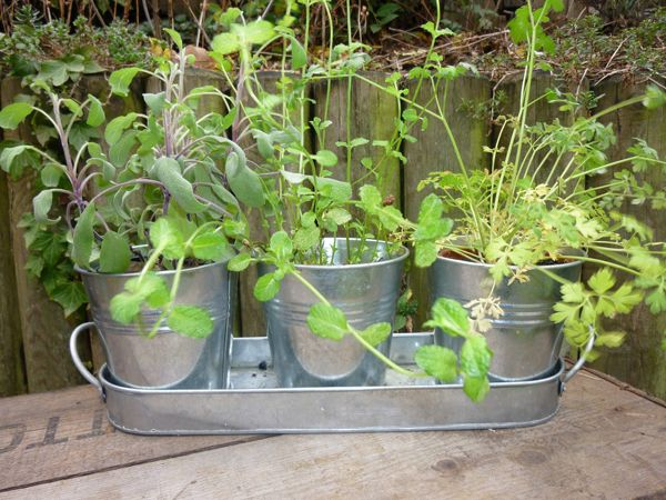 Elegant Tin Flower Pots Cheap