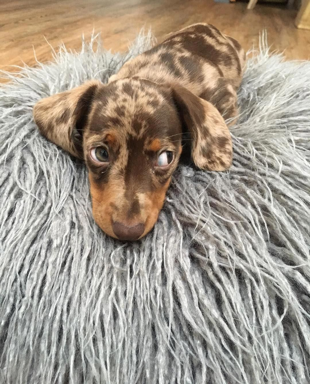 Find Out Additional Info On Dachshund Browse Through Our Site