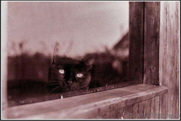 le chat photographe ねこ 猫