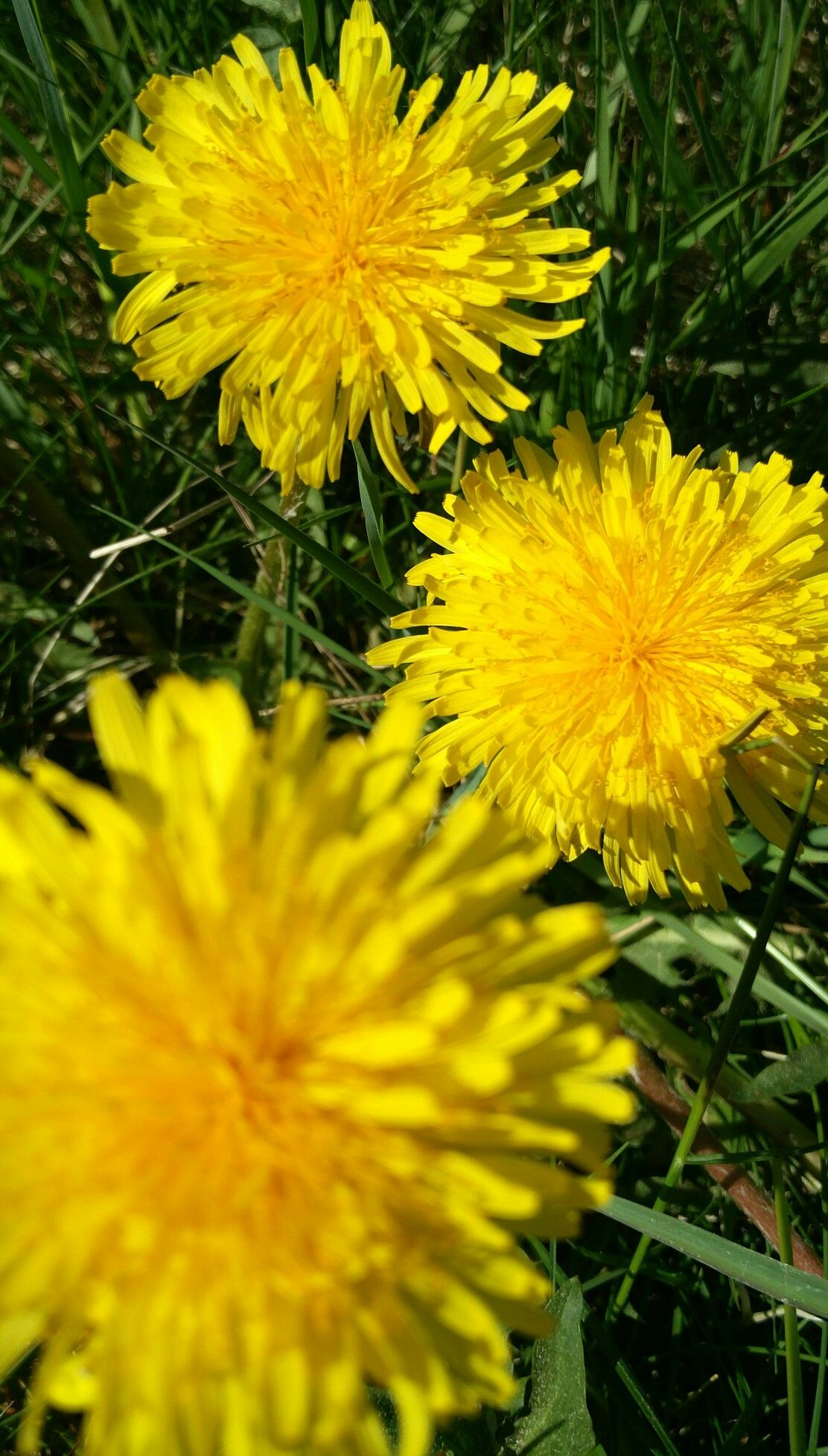 This Is Weedbut Its Yellow And Its Beautiful Yellow Pinterest