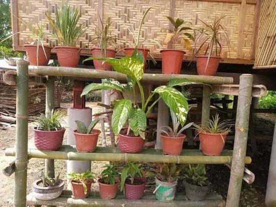 Gambar Rumah Dinding Anyaman Bambu Di 2021 Bambu Rumah Anyaman