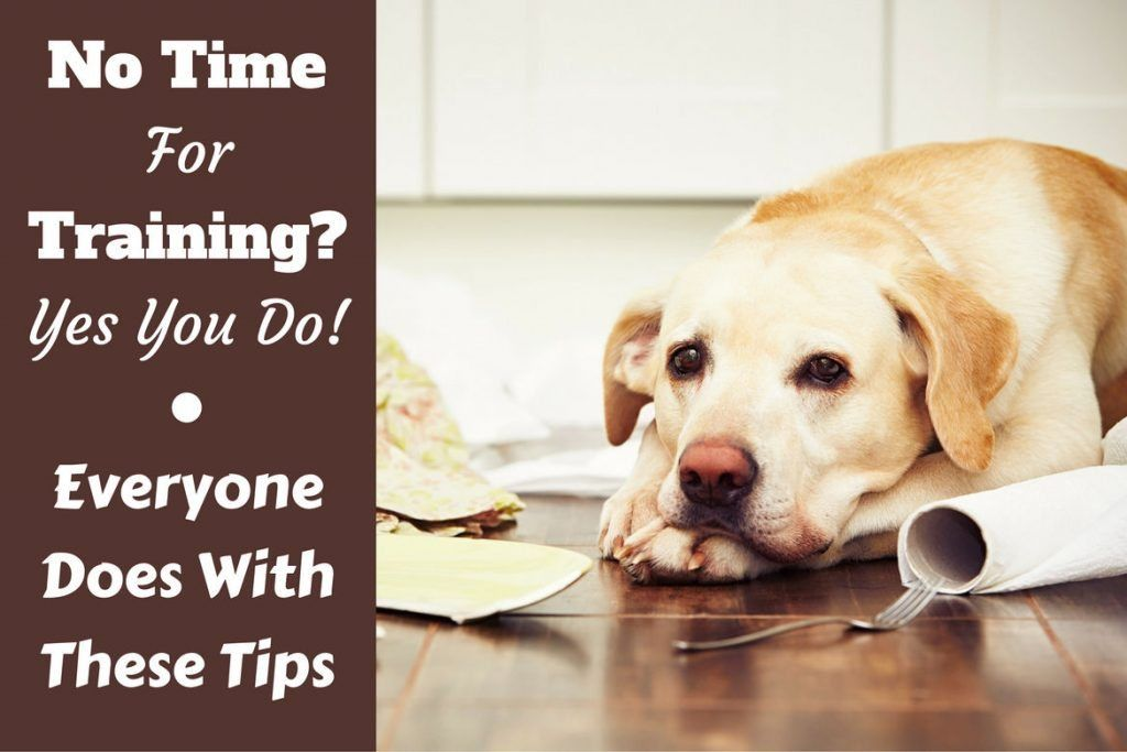 No Time For Dog Training Follow These Tips And Techniques Dog