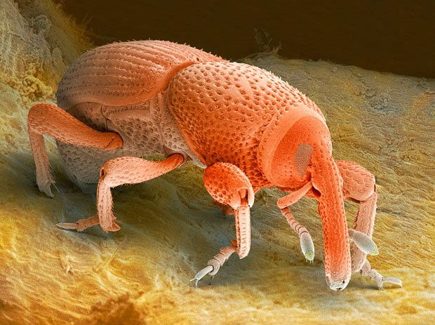 Scanning electron microscope pictures of insects and spiders