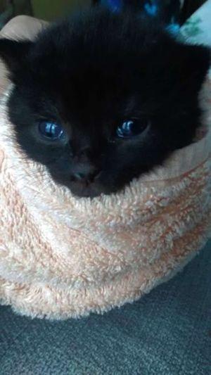 Nj Wayne Rescue Issues Urgent Plea For Info On Newborn Kittens