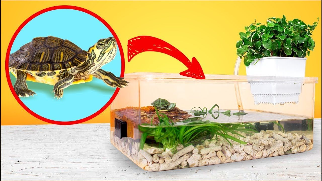 Simple and Cheap Red Eared Turtle Terrarium Tank DIY (With
