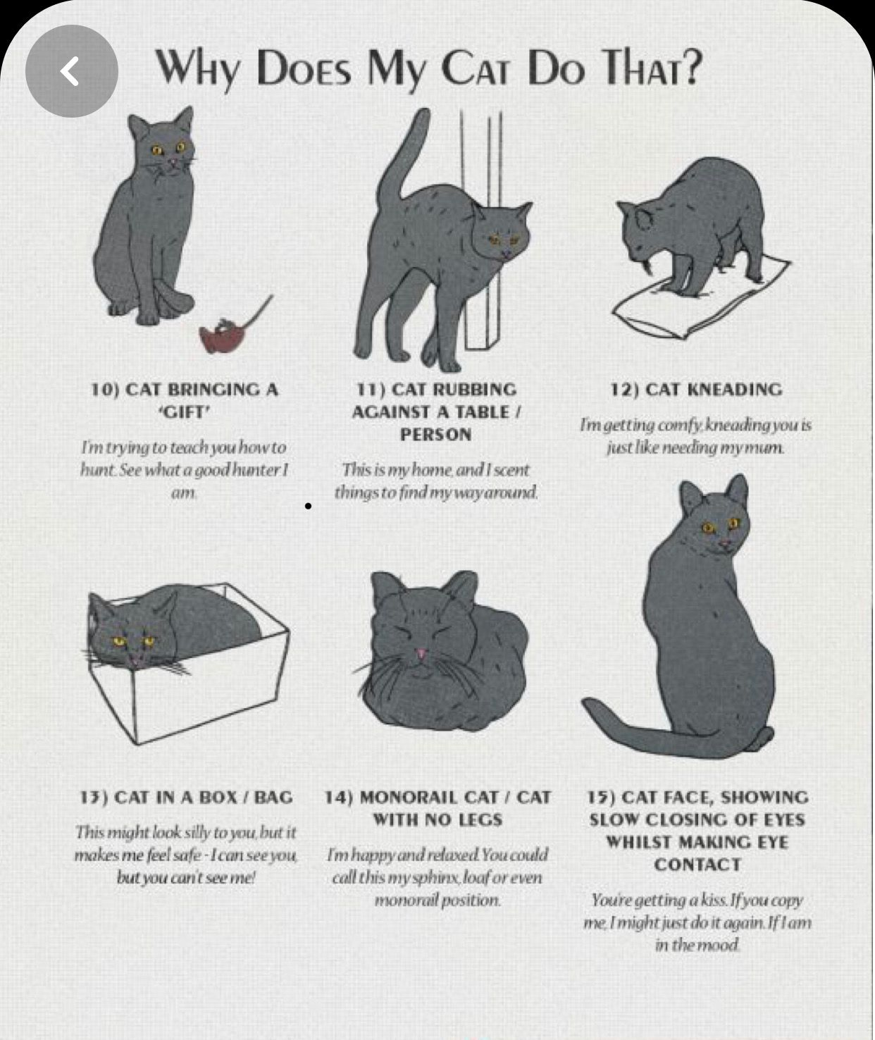Pin By Annemiek Hardenberg On Taal Cat Behavior Cat Language Cat Facts