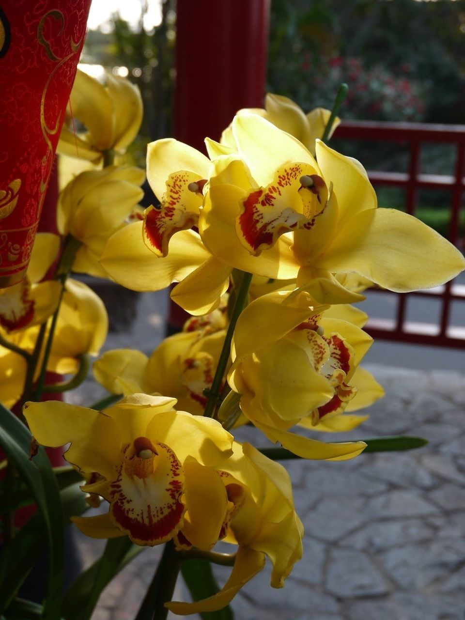 Yellow orchids pinterest