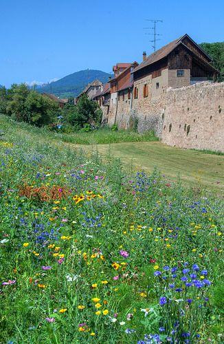 Flowers outside Bergheim, Alsace, France