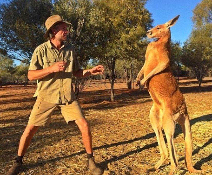 The Most Muscular Kangaroo In The World! Roger :) | Pinterest