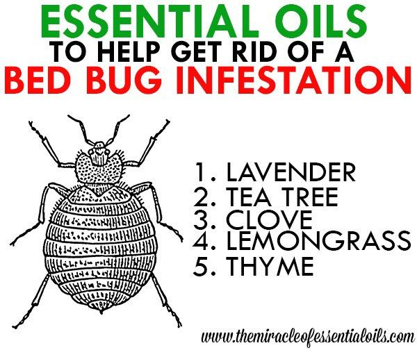 Essential Oils For Bed Bugs Bed Bugs Essential Oils Bed Bugs