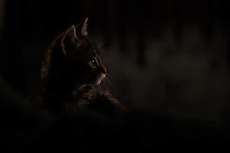 Epingle Par Belicat Sur Chats Noirs Photographie De Chat Photographie Art De La Photographie