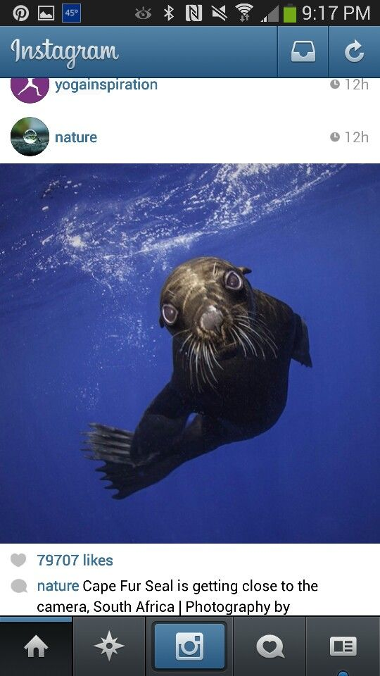 Cape Fur Seal- Africa