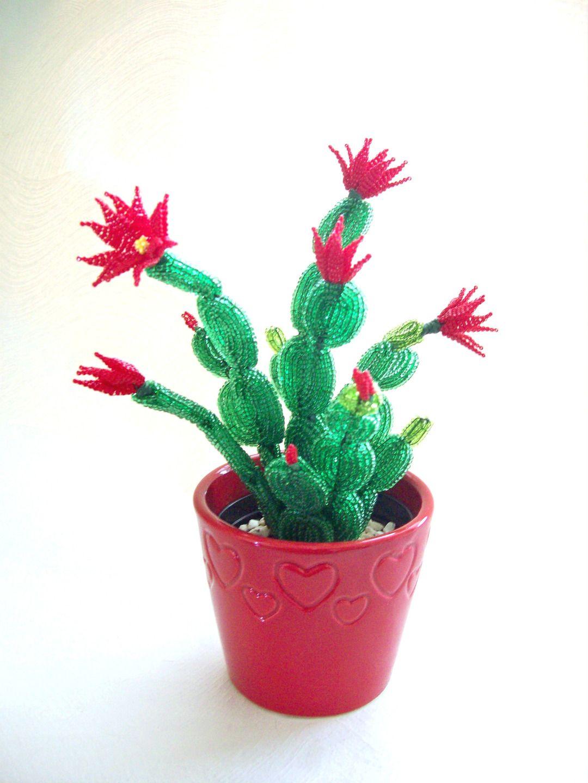 ordinaire plantes grasses fleuries interieur 2 plante grasse d int rieur entretien. Black Bedroom Furniture Sets. Home Design Ideas