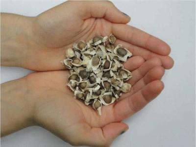 moringa oleifera faydaları