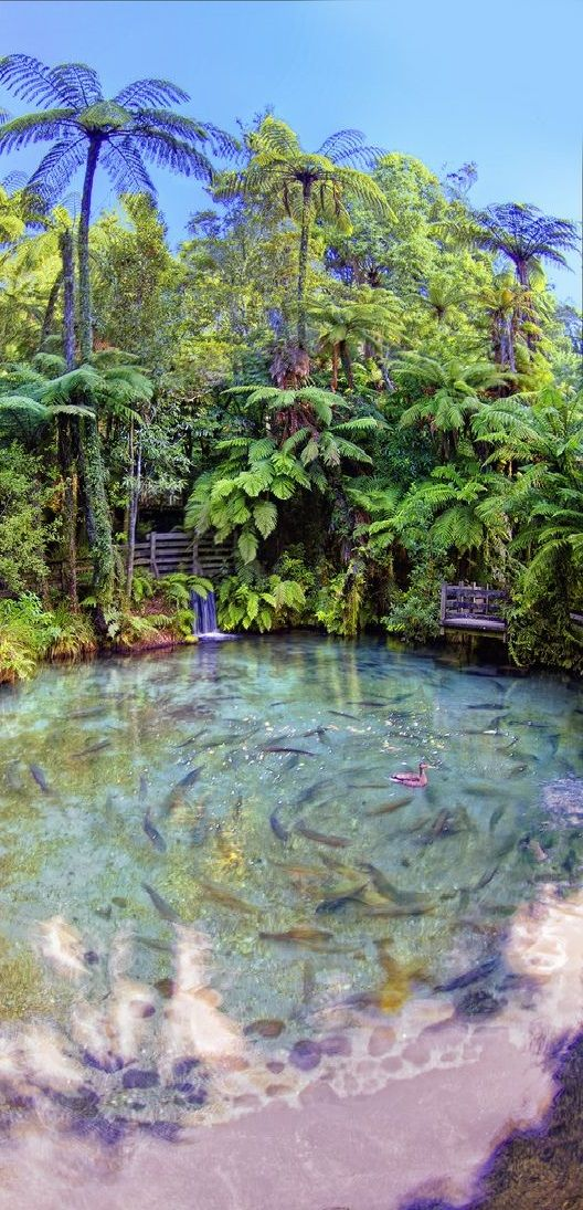 Rainbow Springs Is Truly An Attraction Like No Other In
